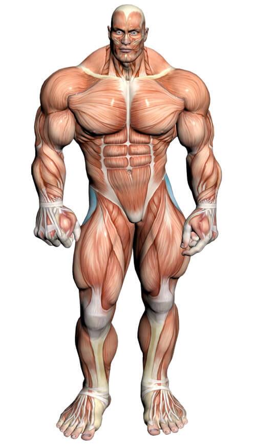 گروه عضلانی مورد هدف