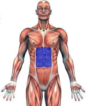 آنانومی بدن در تمرین شکم پرتابی خوابیده