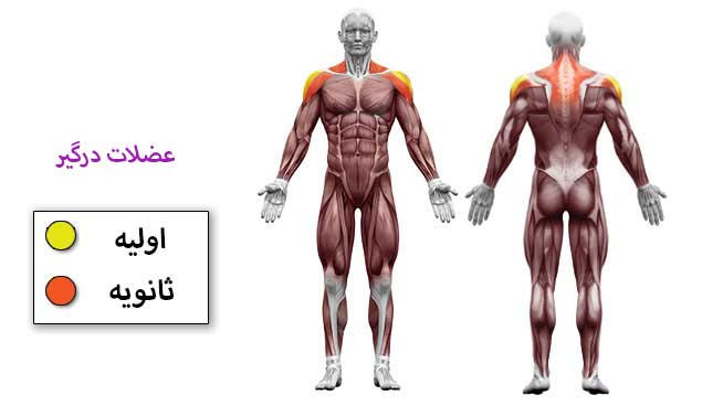 عضلات درگیر در حرکت نشر از جانب