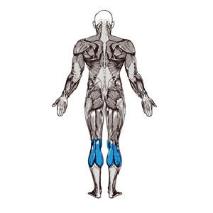 آناتومی بدن ( ساق پا )