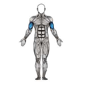 آناتومی بدن ( جلو بازو )