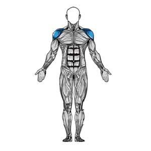 آناتومی بدن ( سرشانه )