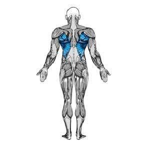 آناتومی بدن ( زیر بغل )