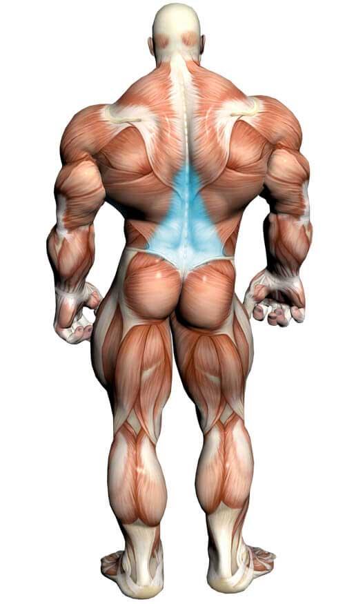 آناتومی بدن ( قسمت پشت )