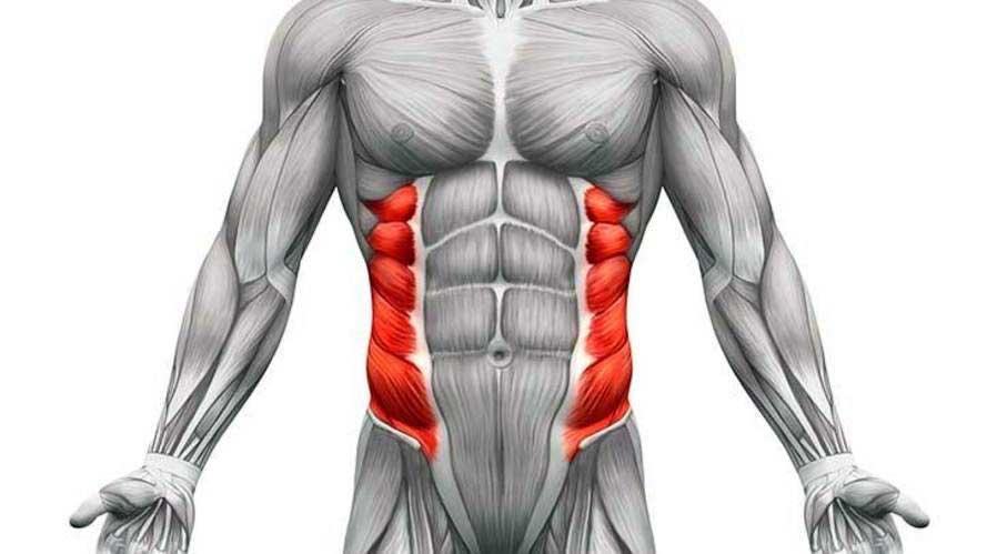آناتومی بدن ( ماهیچه اریب )
