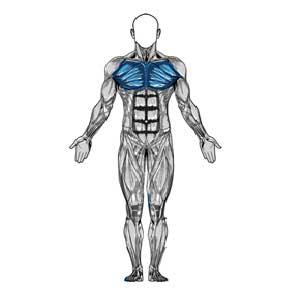 آناتومی بدن ( عضلات قفسه سینه )