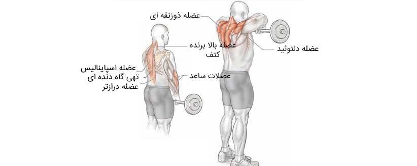 عضلات درگیر در تمرین کول با هالتر