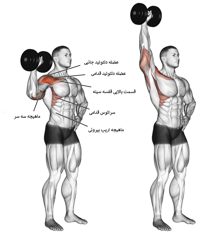 آناتومی بدن سرشانه ( تمرین سرشانه دمبل تک دست )