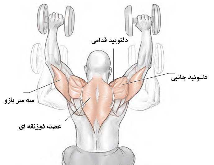 آناتومی عضلات پشت
