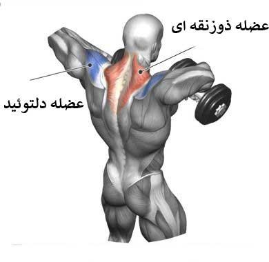 آناتومی در حرکت کول دمبل