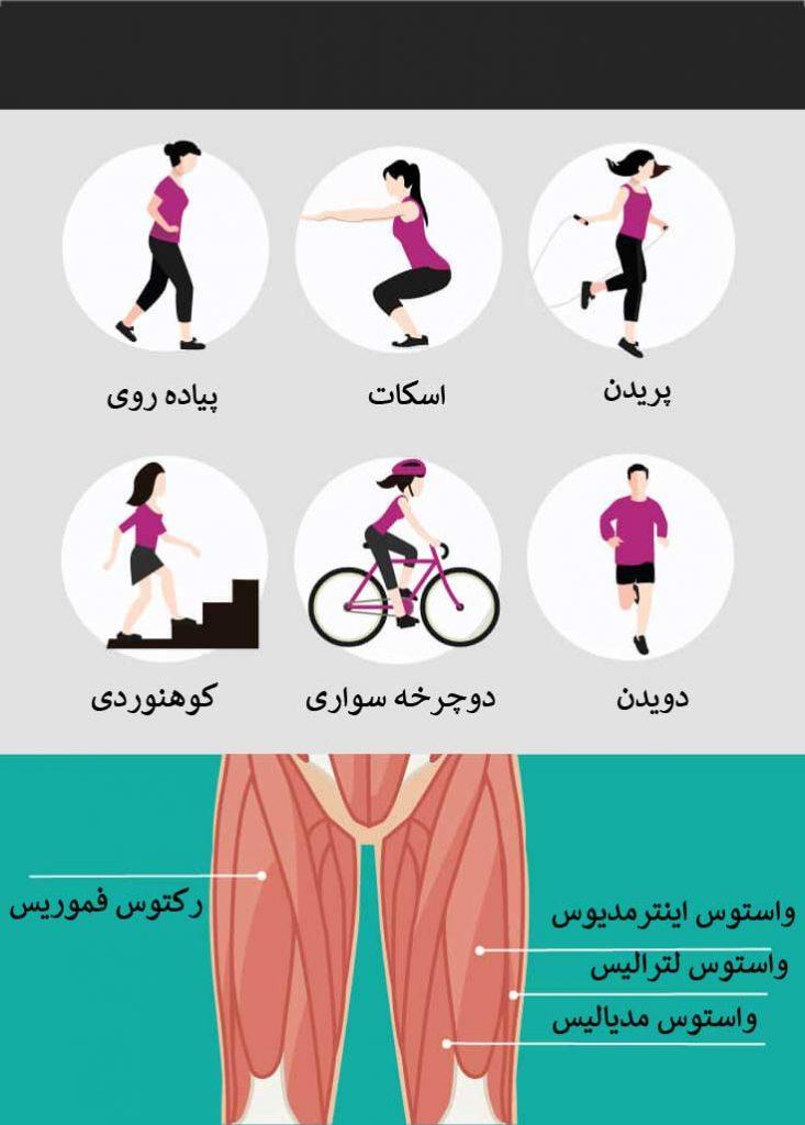 اهمیت تمرینات مربوط به عضله ران پا