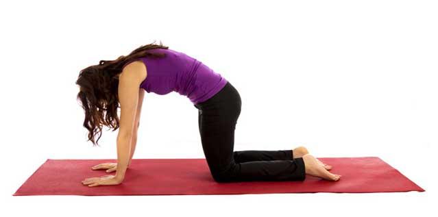 حرکت کشش گربه برای تقویت عضلات کمر