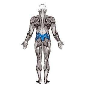 آناتومی بدن ( پشتی کوچک )