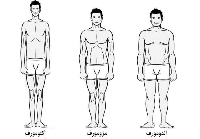 انواع ساختار فیزیکی بدن انسان
