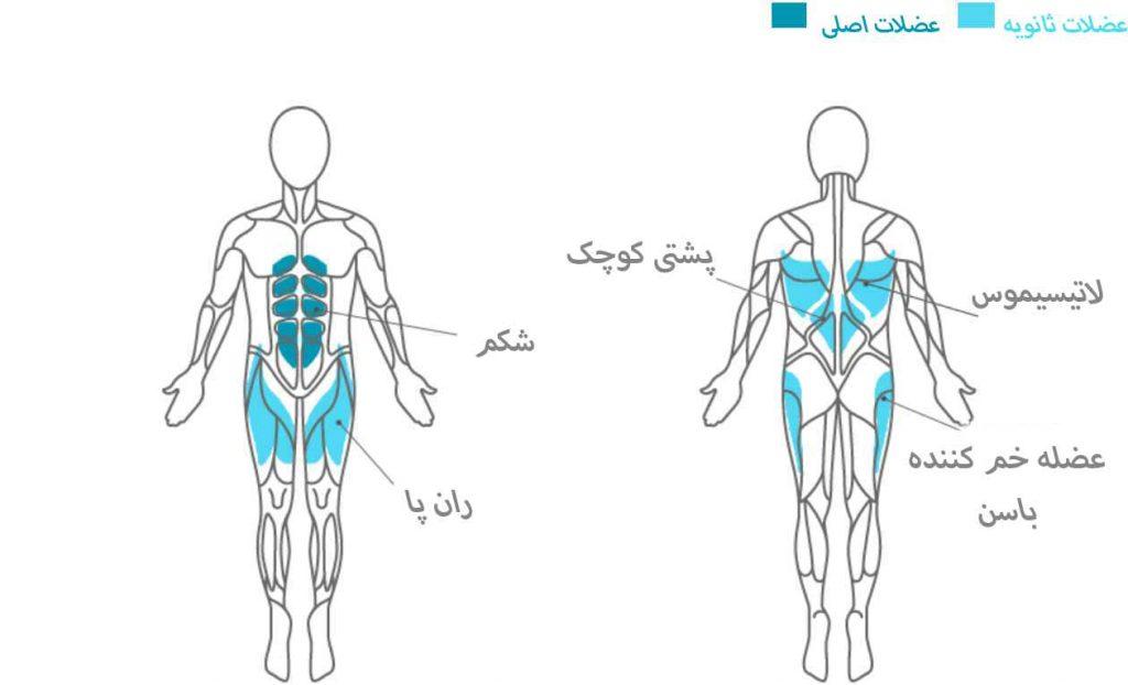 عضلات درگیر در تمرین شکم بارفیکس