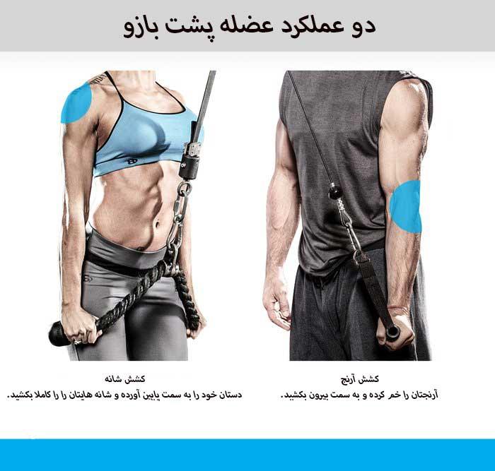 دو عملکرد عضله پشت بازو