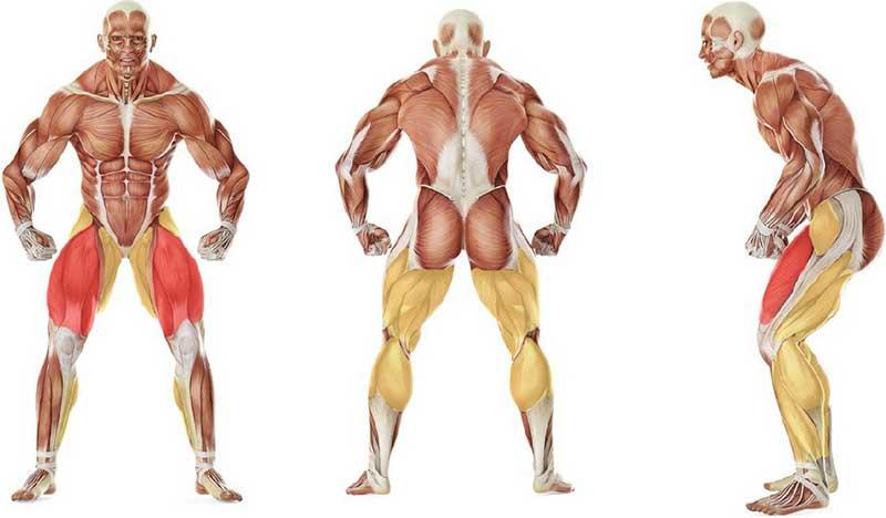 عضلات درگیر در حرکت شافل