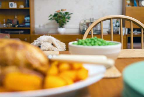برای کاهش وزن در خانه غذا بخورید