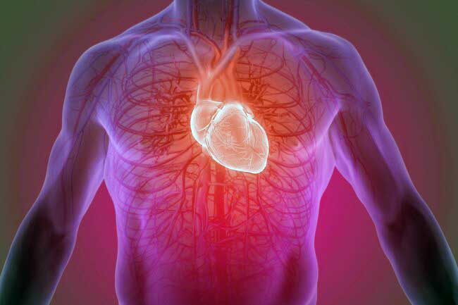 مقابله با بیماری های قلبی با پیروی از رژیم نوردیک