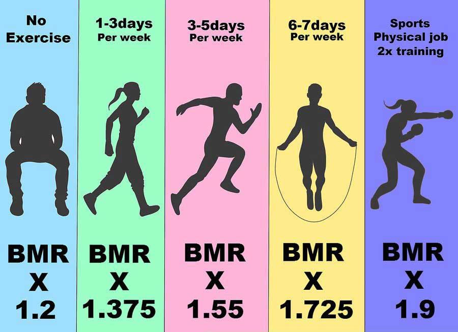 تعیین کالری مورد نیاز بدن از طریق سطح فعالیت های فیزیکی
