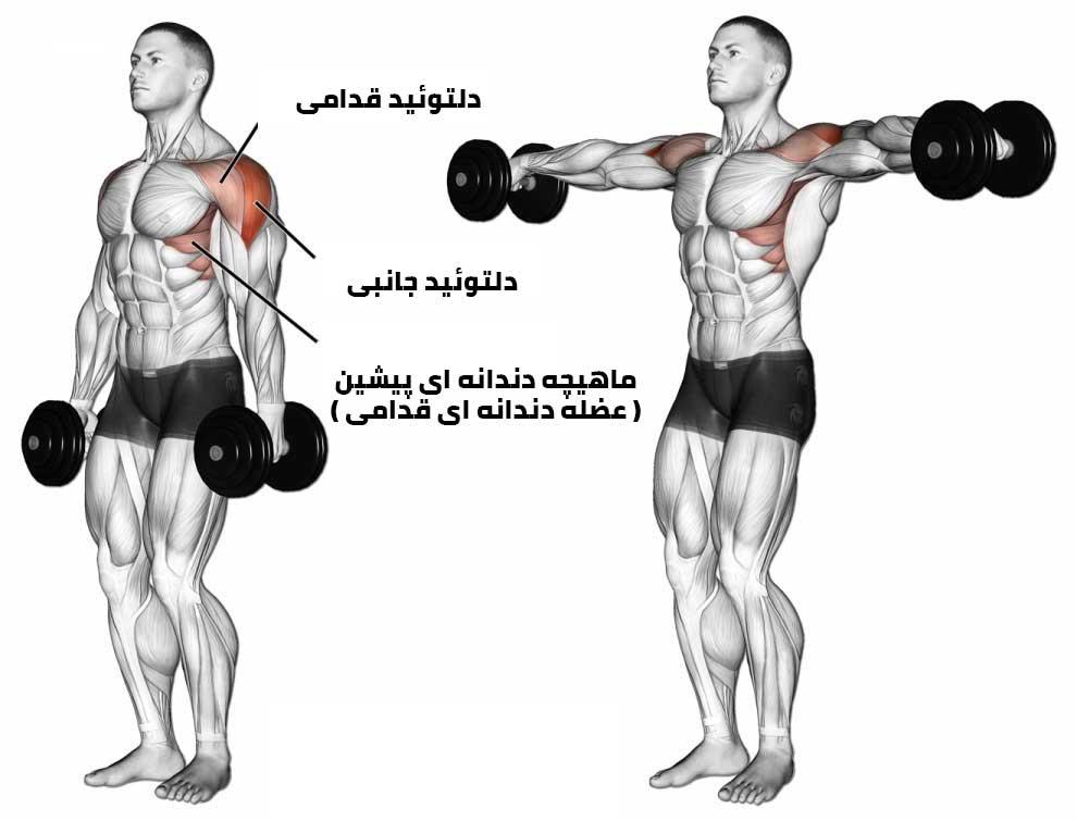 عضلات درگیر در تمرین