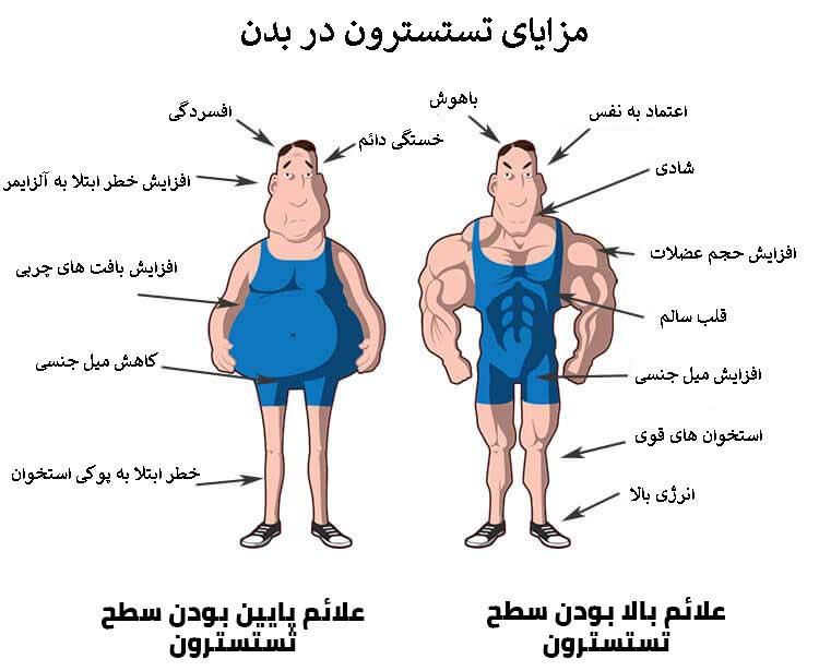 مزایای مکمل تستسترون در بدن انسان