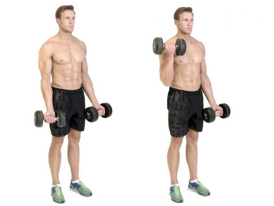 تمرین جلو بازو دمبل تناوبی ایستاده